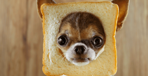 Can dogs eat sourdough bread