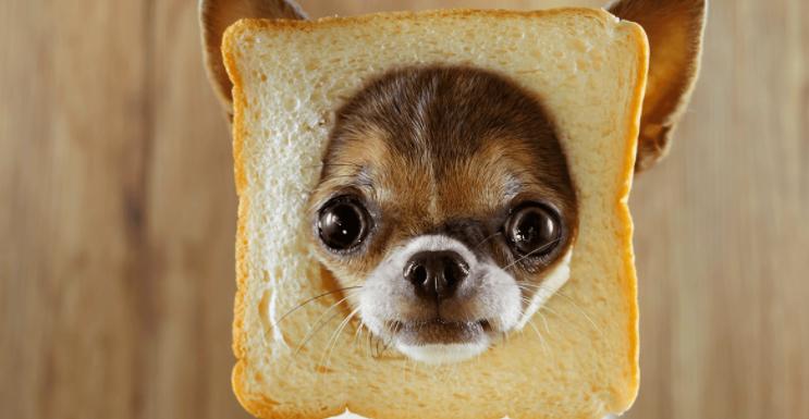 Can Dogs Eat Sourdough Bread? – Is it Bad?