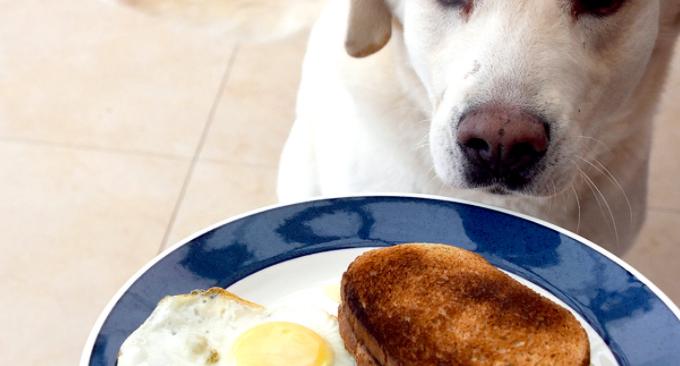 What Happens if My Dog Eats Sourdough Bread?
